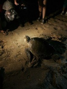 Turtles Rescue
