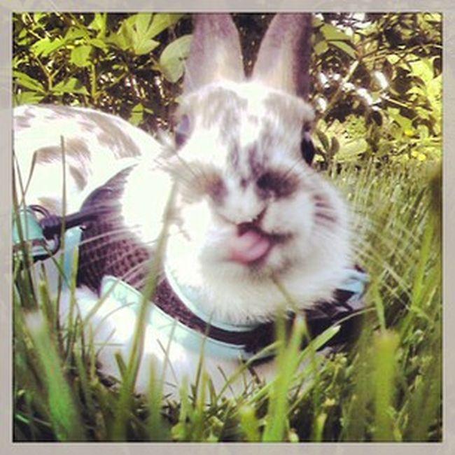 Photos of Bunny Tongues