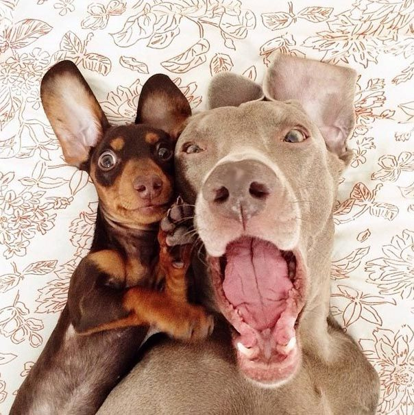 Two Dogs Fooling Around