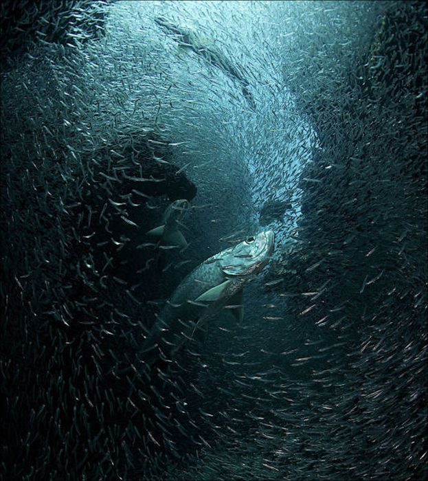 The Best Photos from National Geographic 2013, part 2013