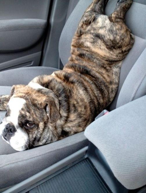 The Most Awkward Dog Photos of the Year