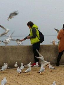 Seagulls for Dinner