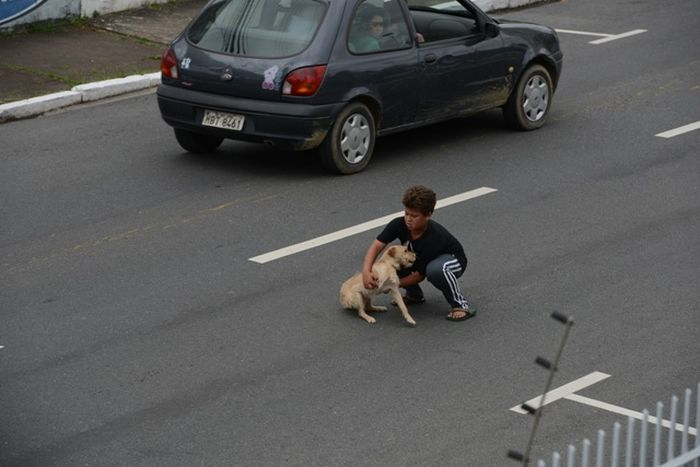 Boy Is Trying to Rescue a Dog