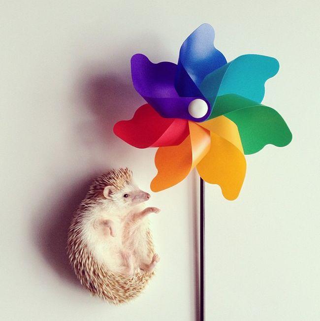 Darcy The Flying Hedgehog