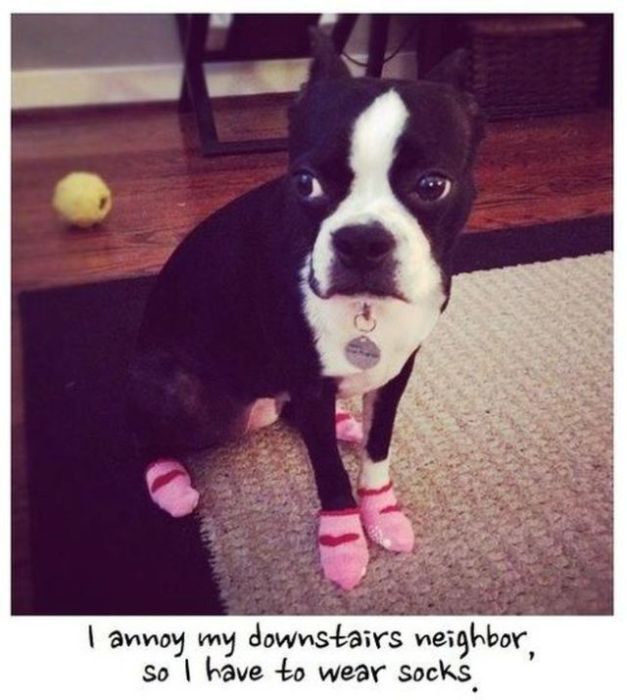Funny Dog Pictures, part 2