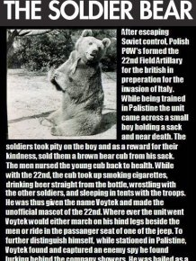 Voytek, the Soldier Bear