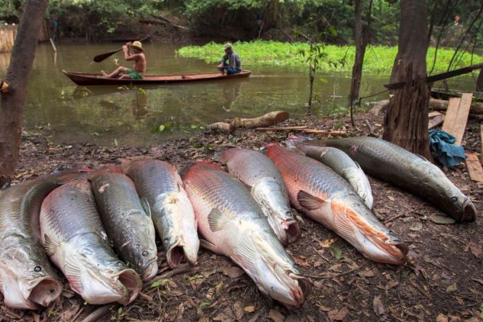 Fishing in Brazil