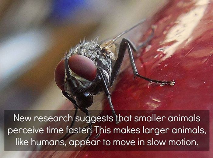 Unbelievable Scientific Facts