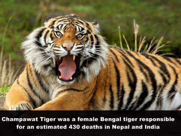 Fun Facts, part 15
