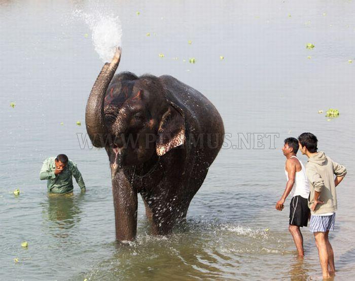 Elephant Beauty Pageant in Nepal
