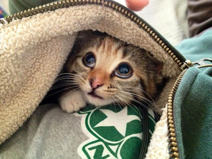The Best Baby Animal Photos of 2013, part 2013