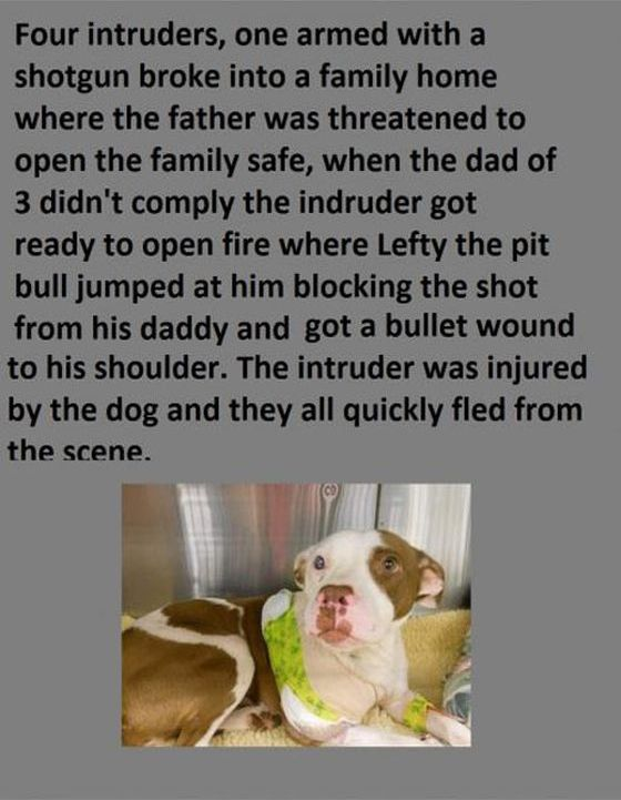 These Pit Bulls Are Heroes