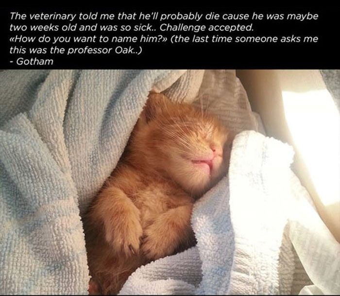Story of a Cat
