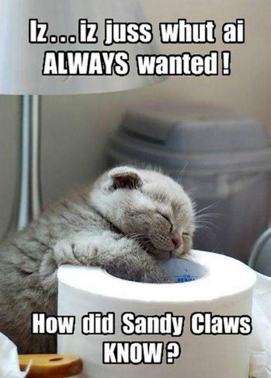 Funny Christmas Cats   Animals
