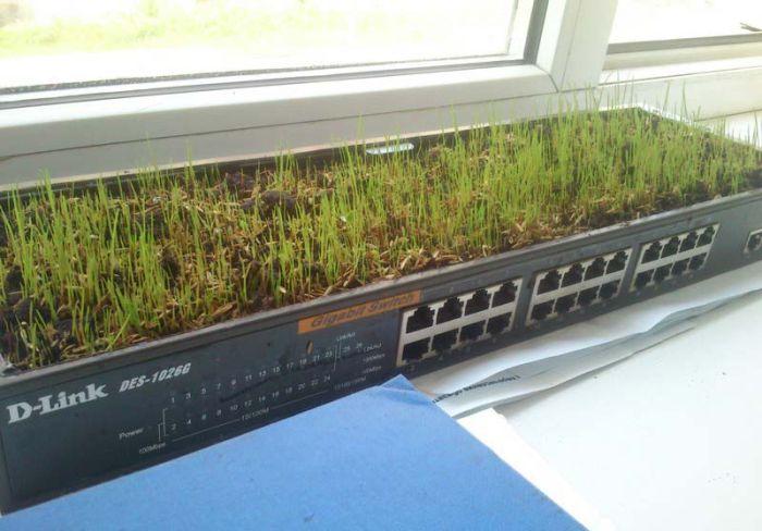 Grass Office