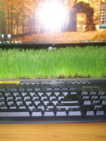 Grass Office