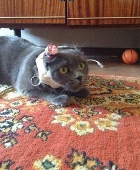 Trolling a Cat