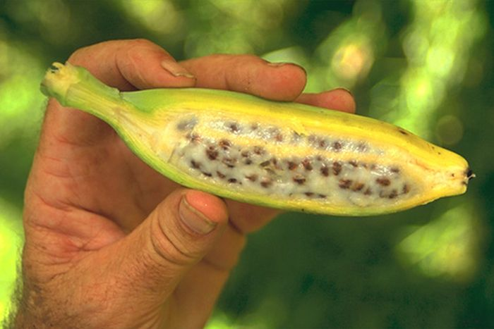 Plants that Come From Unusual Seeds