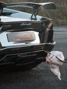 Lamborghini Roasted Turkey