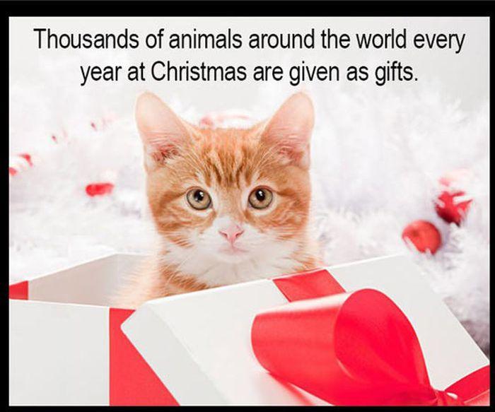 Christmas Kitten/Puppy Rescue