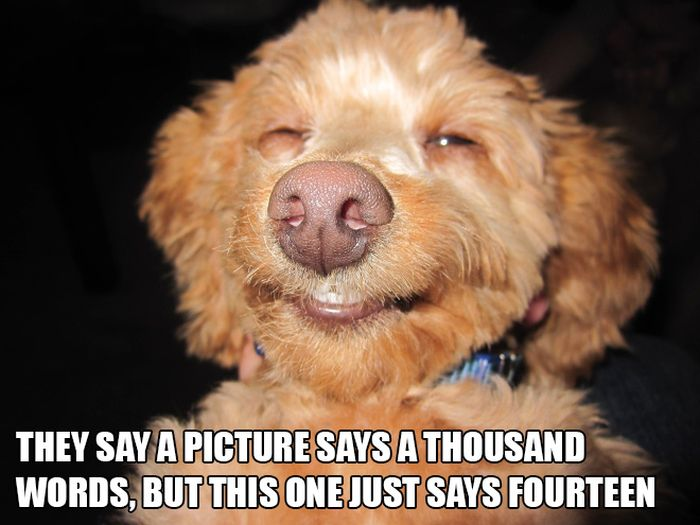 Silly Things on Silly Animal Pictures