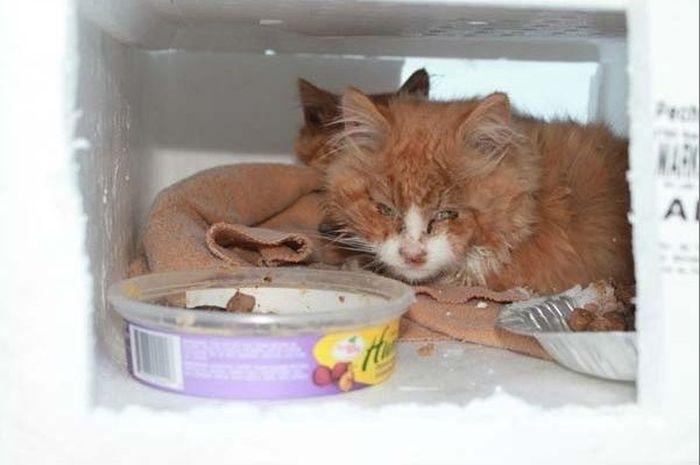 Rescued Kittens