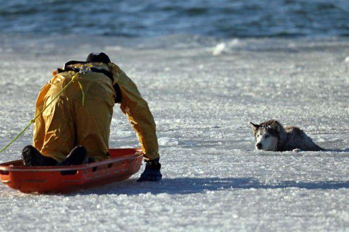 Husky Rescue