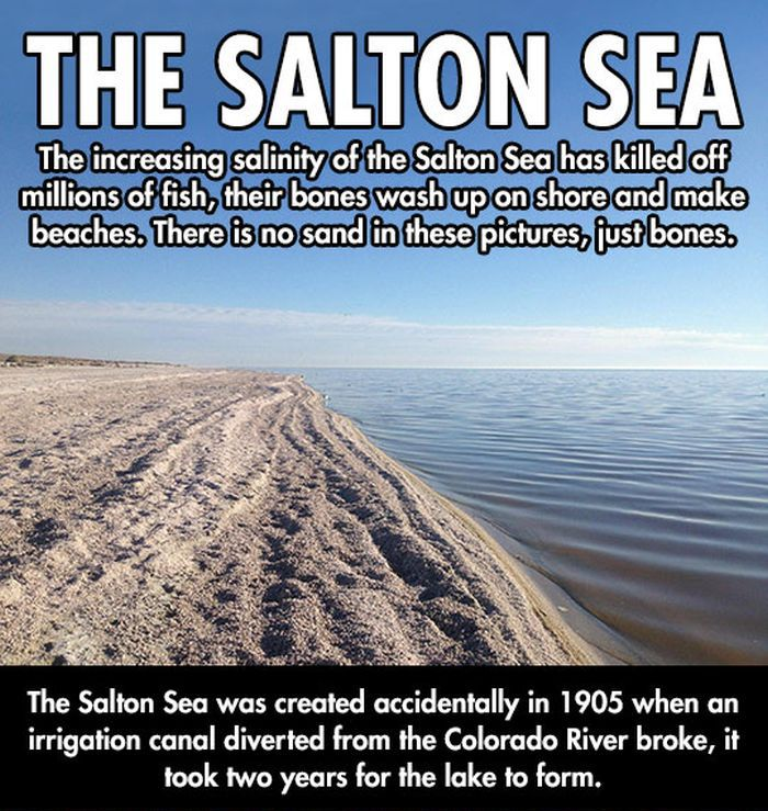 Salton Sea | Others