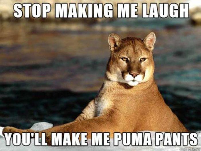 Funny Puns, part 16