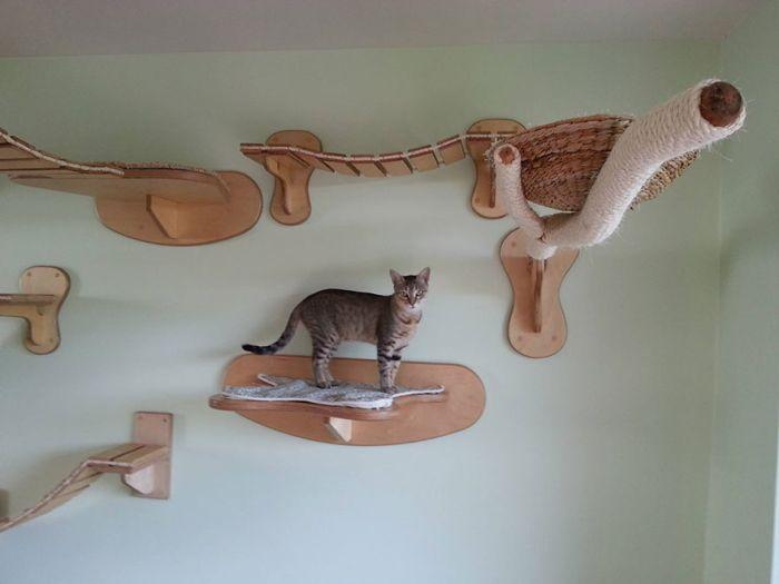 Cats' Playground