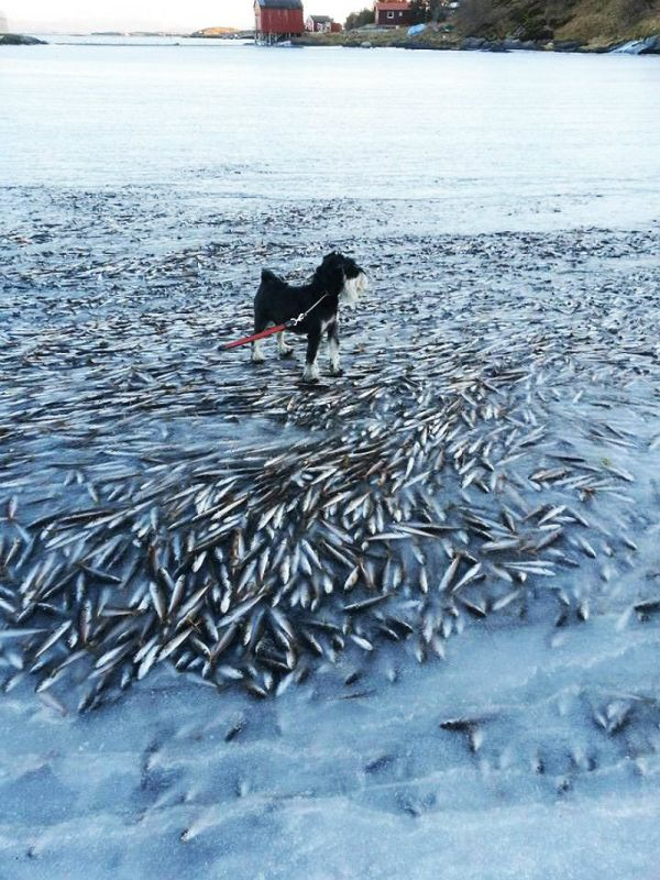 Flash-Frozen Fish in Norway
