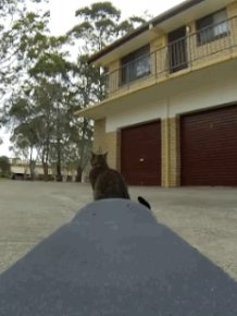 Didga, the Skateboarding Cat