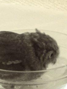 Bathing Owl