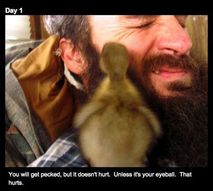 Duckling and the Beard