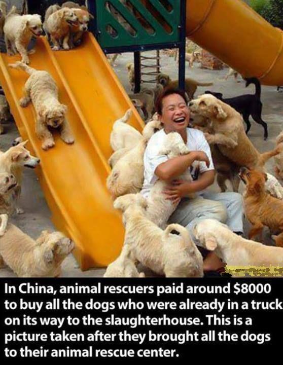 Why Dog Is Man's Best Friend, part 2