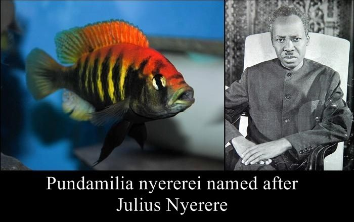 Species Named After Famous Persons