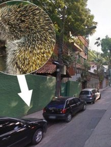 Porcupine Falls from a Lamp Post onto Woman