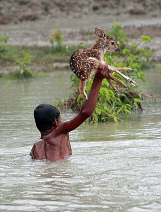 Boy Saves a Fawn
