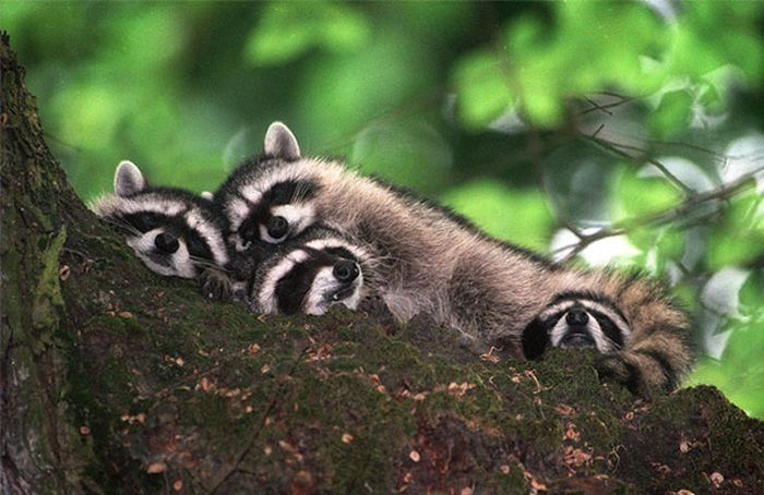 Animals Using Each Other As Pillows