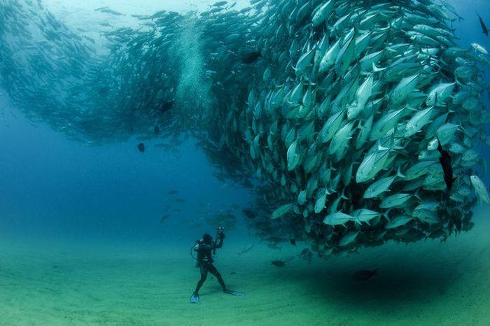 Fish Tornado