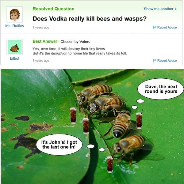 Funny Yahoo Answers Questions