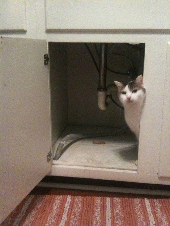 Afraid of a Vacuum Cleaner