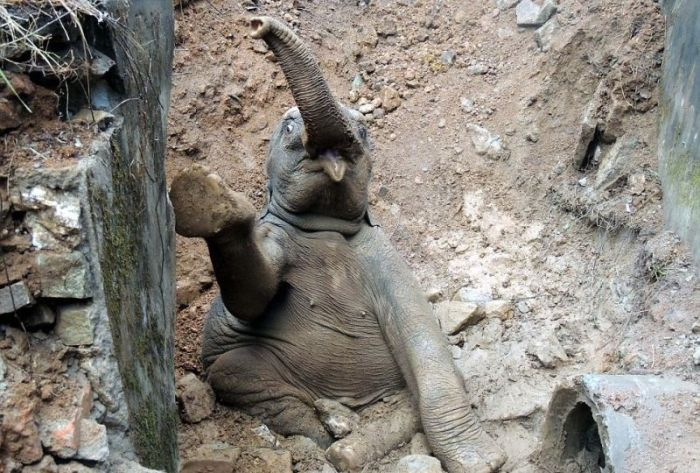 Baby Elephant in Trouble