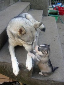 Animals and Their Mini Me Versions