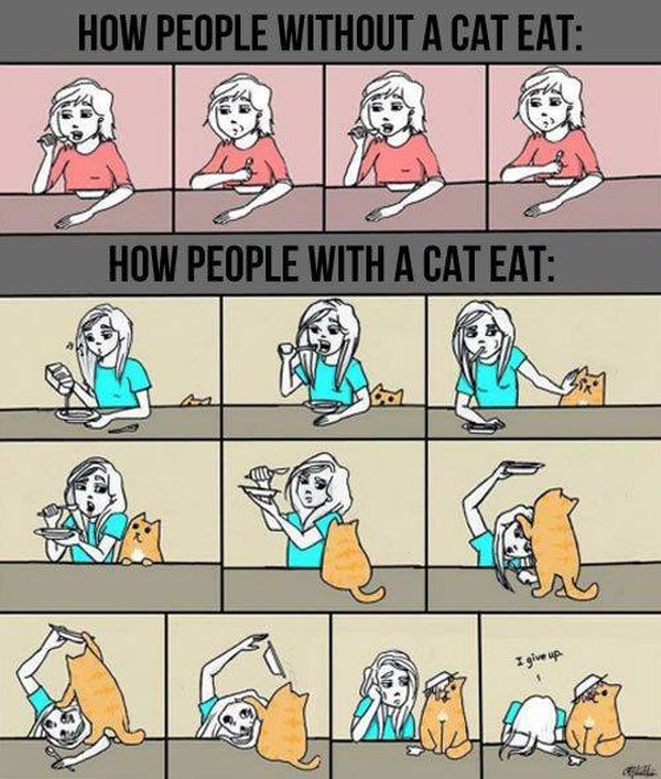 Pictures About Cats