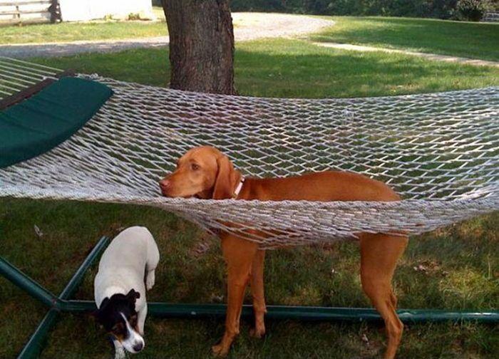 Pets vs Furniture