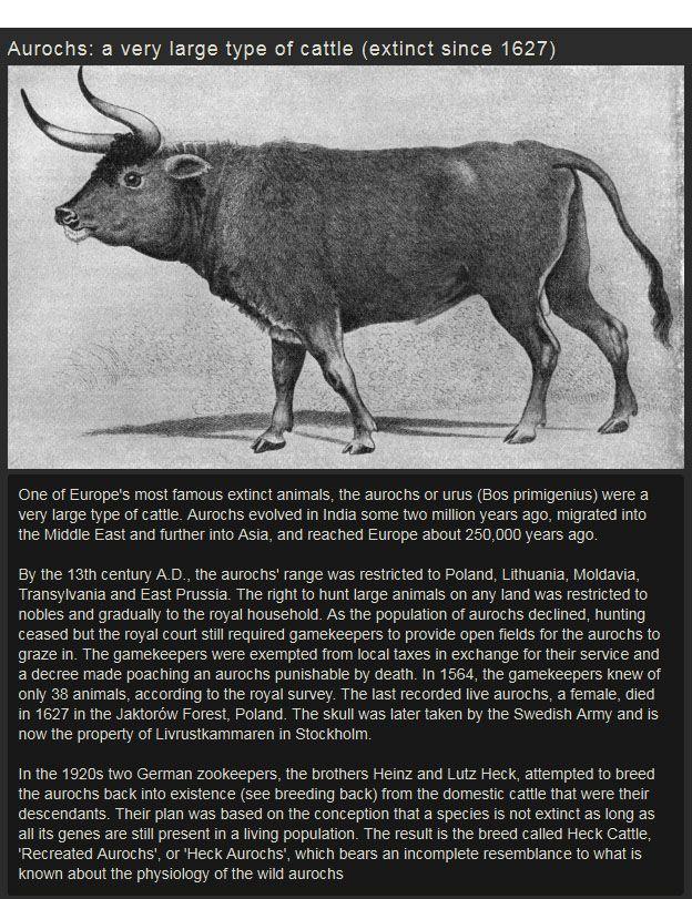 Amazing Extinct Animals