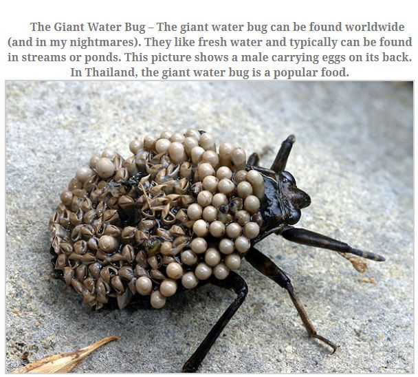The Largest Insects