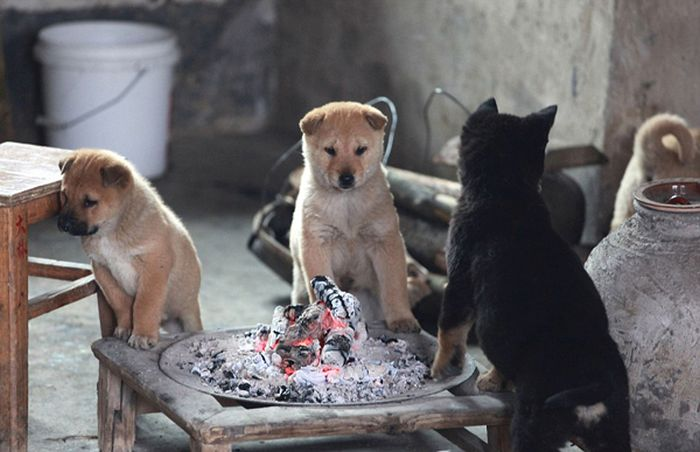 Stray Puppies Trying to Stay Warm