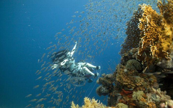 Scuba Diving in a Wheelchair